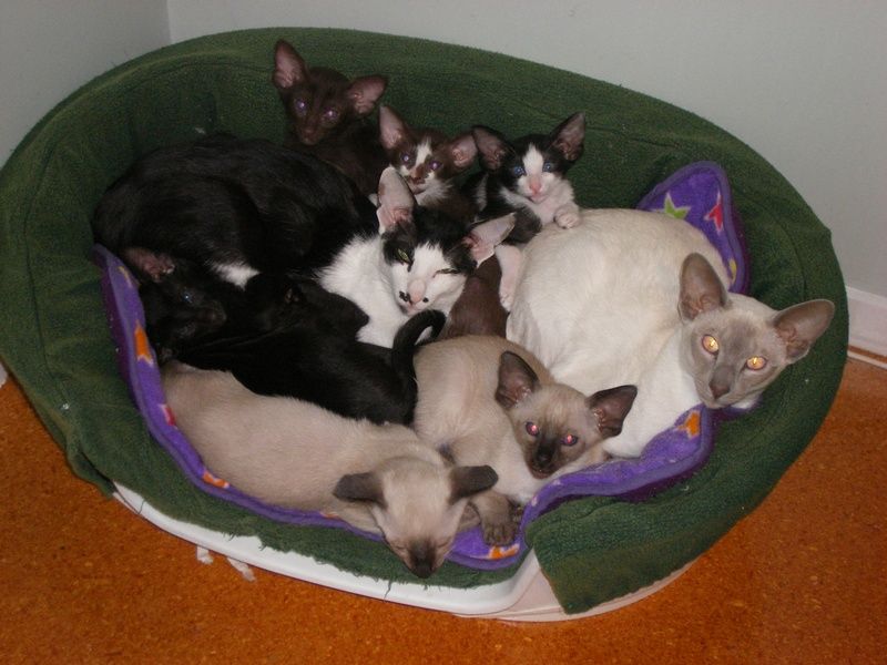 Maggie, Baaarby and all the kittens